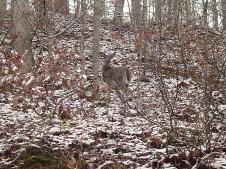 bambi sayin howdy