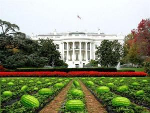 whitehouse-watermellons